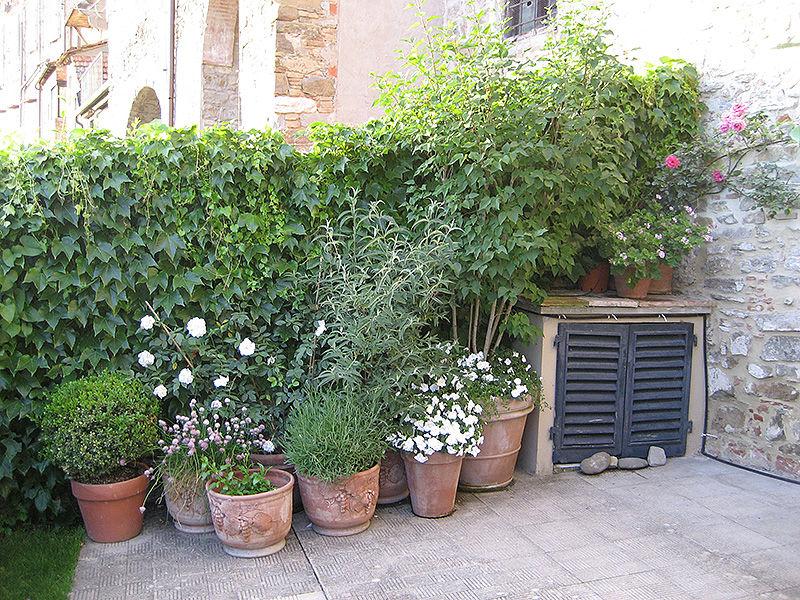 Alberi da giardino piccolo interesting giardino di for Albero per piccolo giardino