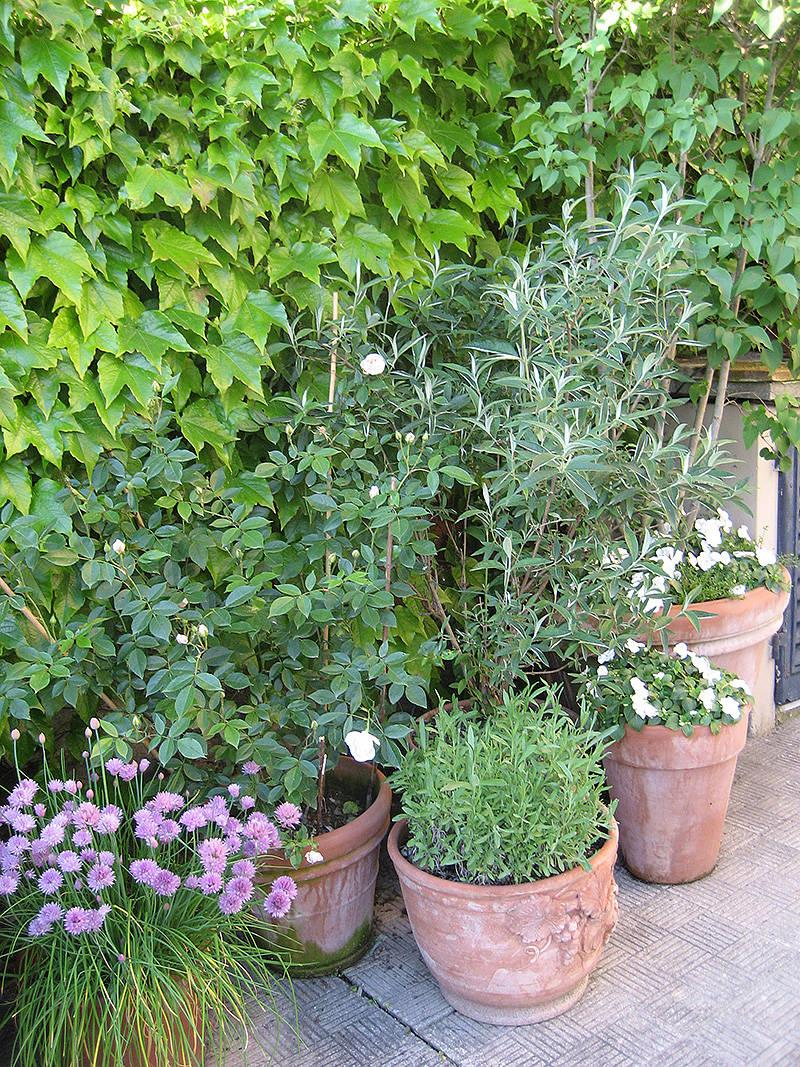 Progettazione outdoor per un giardino in toscana for Vasi erba