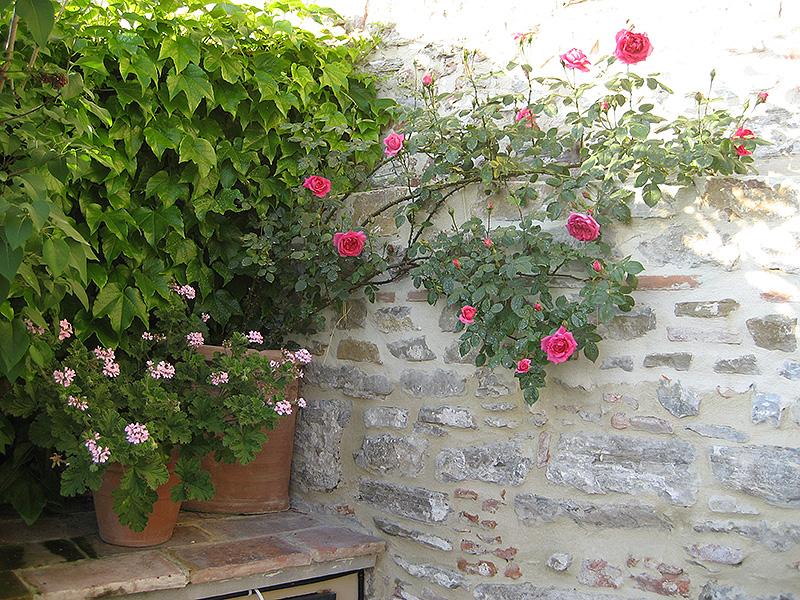 Progettazione outdoor per un giardino in toscana - Scale per giardini ...