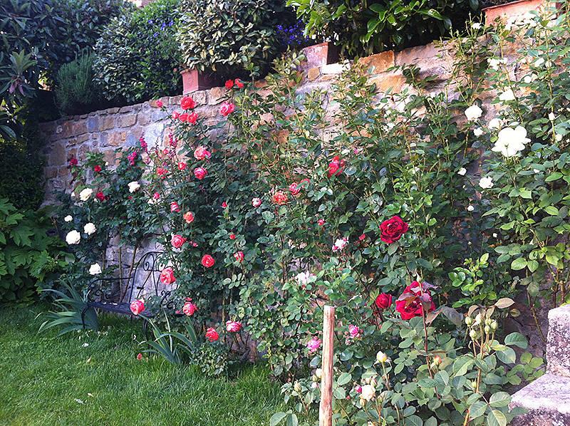 Progettazione outdoor per un giardino in toscana - Giardino con rose ...