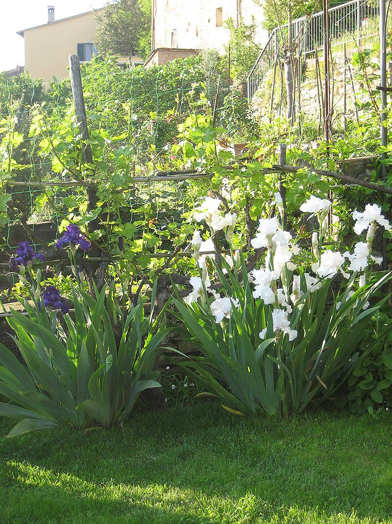 Recinzioni giardino e giardino in ombra quali piante - Piante giardino ombra ...